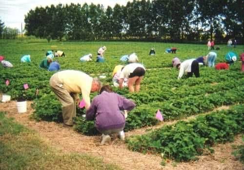 Ваучери за сезонни работници в земеделието или трудови договори за един ден